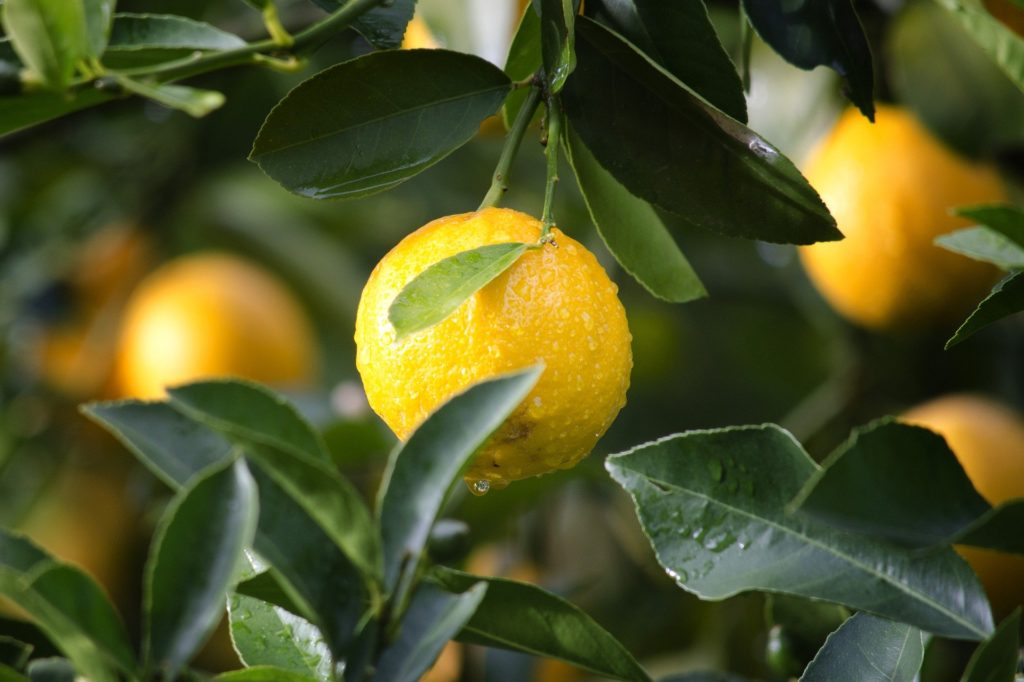 Détox Citron